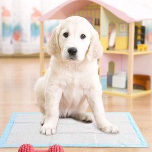 Dog Training Aids