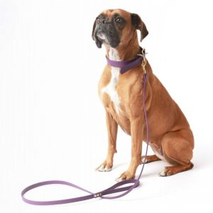 Pet Collars, Harnesses & Leashes