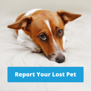 Report a Lost Pet - Report Lost Dog Online