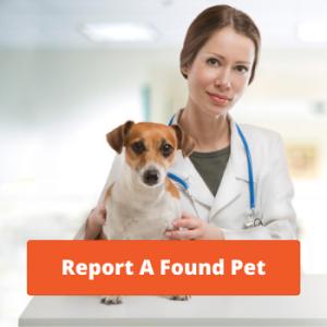 Report a Found Pet - Report a Found Dog or Cat