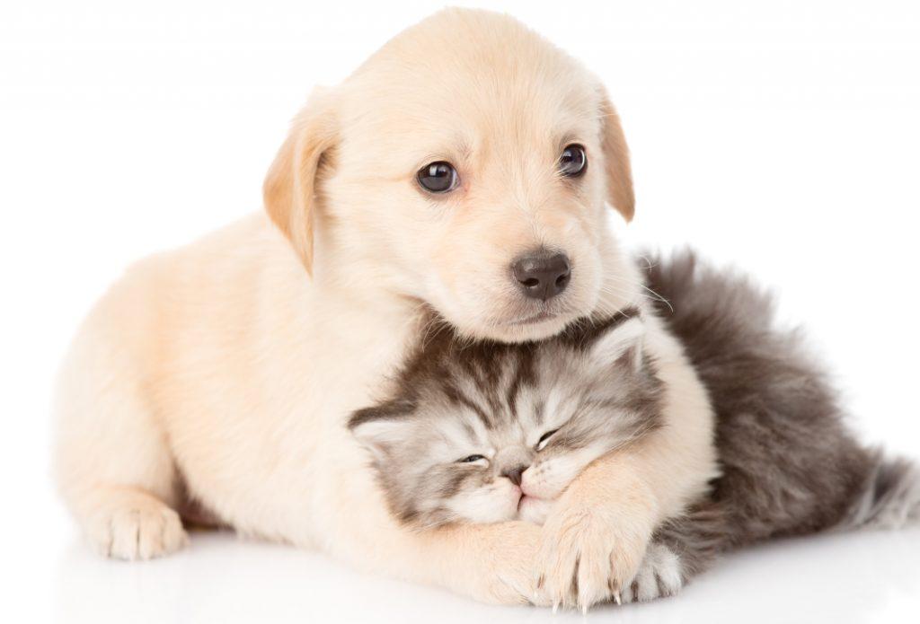 Pet Registry Australia