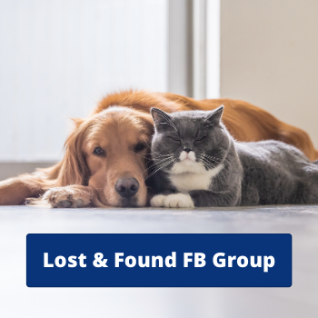 Lost & Found Pet Groups on Facebook