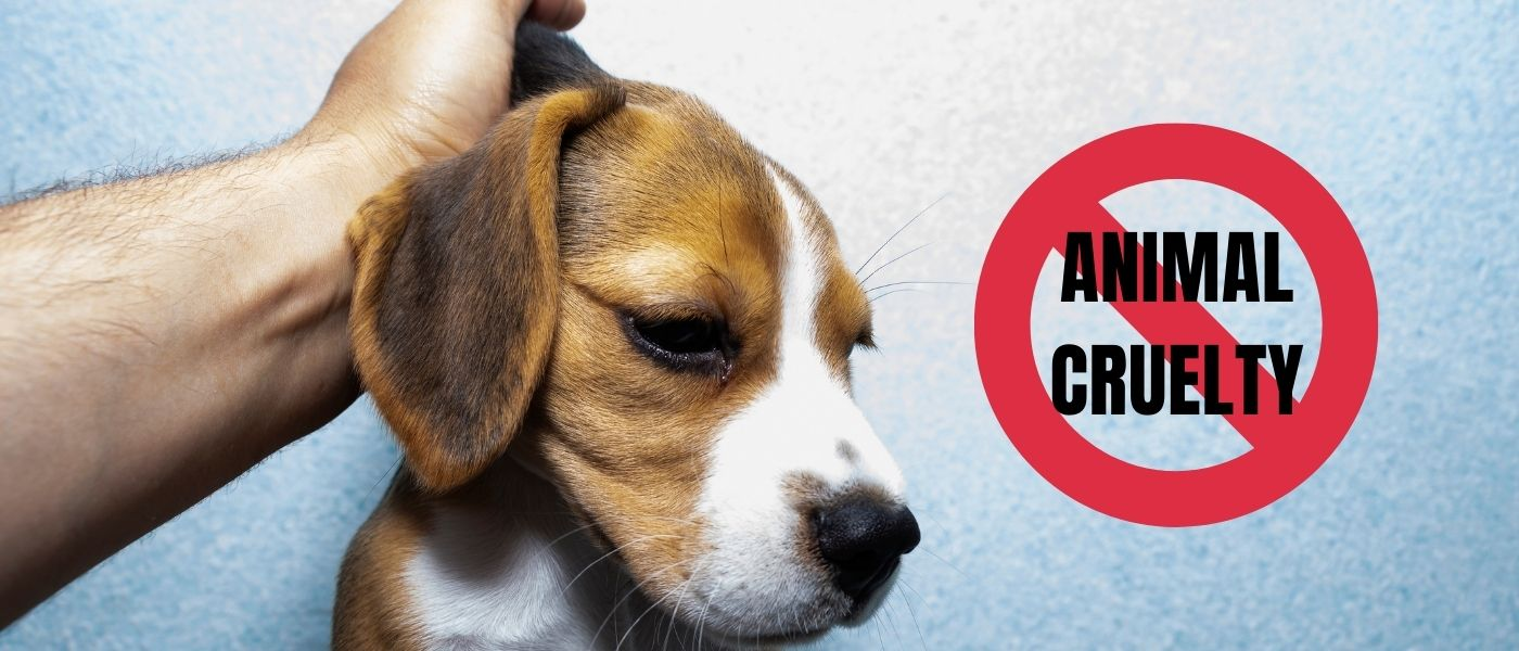8 Ways You Can Help Prevent Animal Cruelty