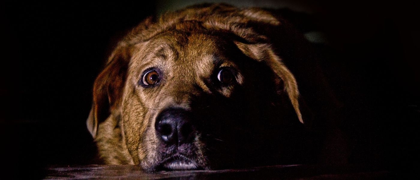 How To Keep Your Pet Safe From Fireworks & Storms