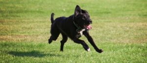 How To Train Your Dog To Stop Chasing