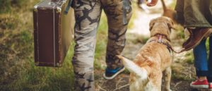 How To Travel With Your Dog Safely
