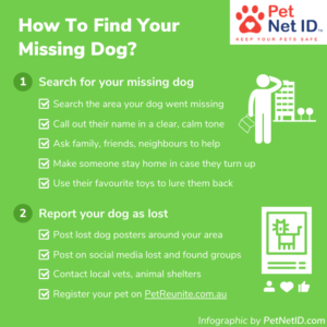 Infographic - How To Find Your Missing Dog