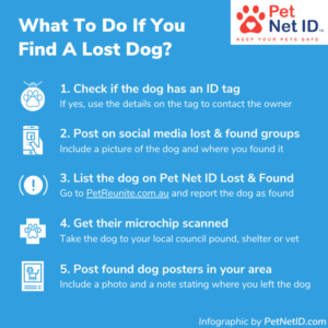 Infographic - What To Do If You Find A Lost A Pet