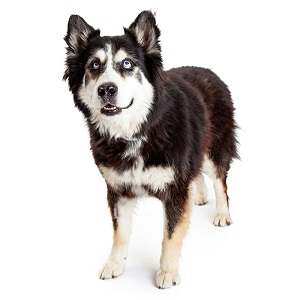 Good Names for Alaskan Malamutes