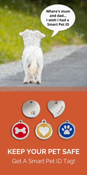 Dog ID Tags for Sale